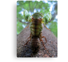 These Wings Canvas Print