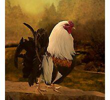 Rooster at Hanauma Bay Photographic Print