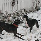Snow fun! by homesick