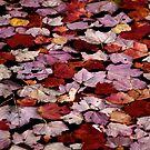 Autumn Afloat by Jeannette Sheehy
