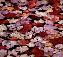 Autumn Afloat by Jeannette Sheehy