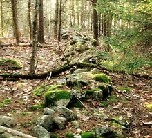 Old Stone Wall in a Forest in Maine by Patty Gross