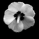 B&W Flower #2 by Sam Davis