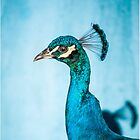 Peacock  by lgraham