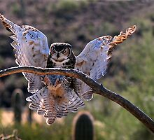The Great Horned Owl by rmanruss