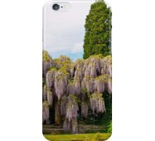 Wisteria Pergola at Exbury Gardens 2 iPhone Case/Skin