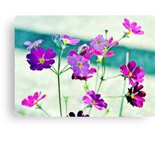 Spring Flowers.  Canvas Print