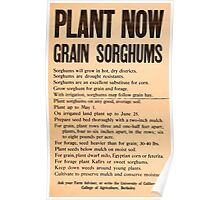 United States Department of Agriculture Poster 0185 Plant Now Grain Sorghums Poster