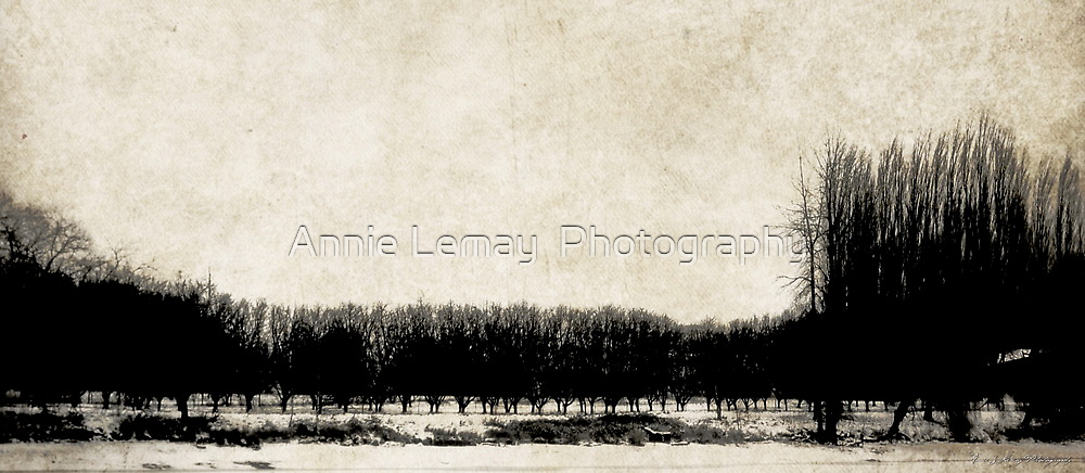 Stillness of Winter by Annie Lemay  Photography