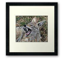 Drenched jackal Framed Print