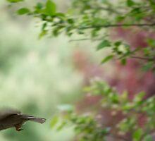 eye on the sparrow by Mark de Jong
