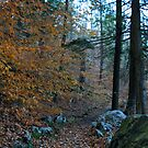 Forest Trail by CMCetra