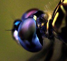 Common Baskettail by ClintDMc