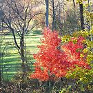 Autumn Fire by Gayle Dolinger