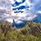 Sage and Sky by Tim Wright