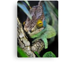 Here's looking at you kid. Canvas Print