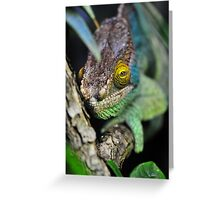 Here's looking at you kid. Greeting Card