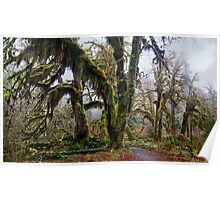 Hall of Mosses - Hoh Rainforest, Olympic N. P. Poster