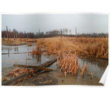 Elk Island marshlands Poster