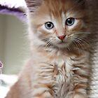 Ginger Ninja by angelkittys