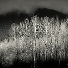 Arbres en noir by Annie Lemay  Photography
