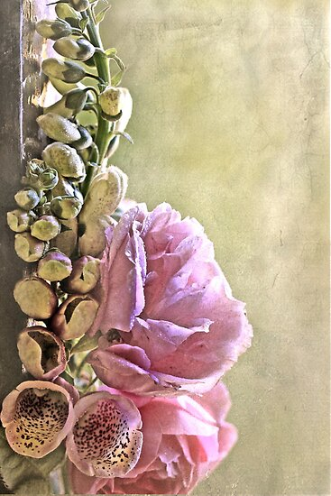 """Foxgloves & Roses ..."" by Rosehaven"