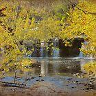 Autumn Brilliance by Sharksladie