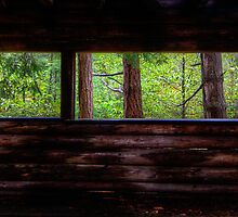Mayne Island Abandoned Cabin - The View by toby snelgrove  IPA
