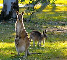 Skippy and friends. Australia by Ali Brown
