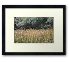 British Meadow Framed Print