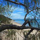 True blue I see you. Bona Bay Whitsundays by Cathie Trimble