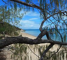 True blue I see you. Bona Bay Whitsundays by Cathie Trimble