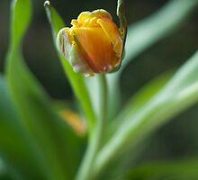 Prelude to Springtime by Ness Hopkins