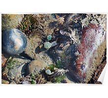 Sea Mysteries uncovered by the tide at Lyme Dorset UK Poster