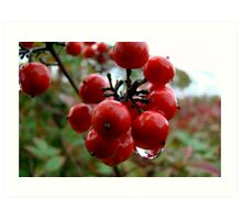 Red Berries Too Art Print