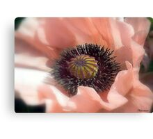 Just Fade Away Canvas Print