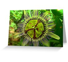 Passion Power Flower Greeting Card