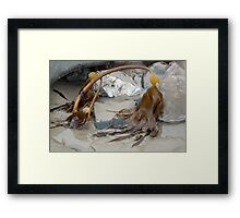 Uncovered By The Tide- Lyme Dorset UK Framed Print