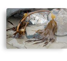 Uncovered By The Tide- Lyme Dorset UK Metal Print