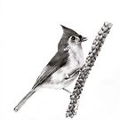 Tufted Titmouse by Elisa Camera