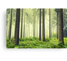 Foggy Secrets Canvas Print