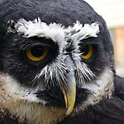 Gizmo, The Spectacled Owl by Joseph T. Meirose IV