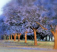Jacaranda City, my home town... by Maureen Grobler
