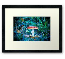 Fly Agaric Framed Print