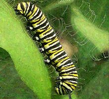 Monarch Butterfly Caterpillar Relaxing by EggSpecially