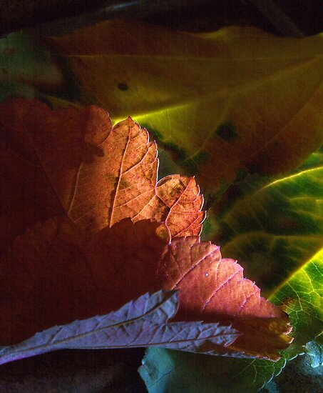 Fall colors by Susan Littlefield