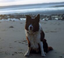 Indy on the beach at twilight by Michael Haslam