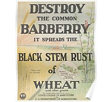 United States Department of Agriculture Poster 0095 Destroy Common Bayberry It Spreads Black Stem Rust of Wheat Poster