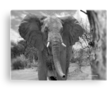 UP CLOSE AND PERSONAL WITH ELEPHANTS - SERIES  3 Canvas Print