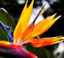 Colors of Paradise by Dale Frazier